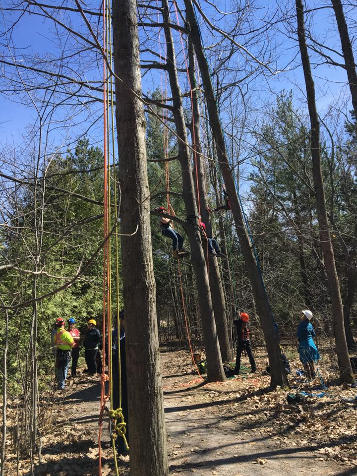 Participants at the Women In Trees conference climbing trees on the Fleming College Frost Campus site.